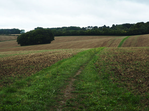 Penn and Coleshill circular walk